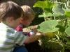 boysplantweb